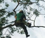branch-cutting