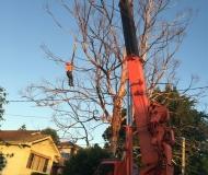 crane-work