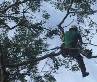 tmackneysons-tree-services-1