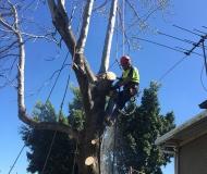 tmackneysons-tree-trimming