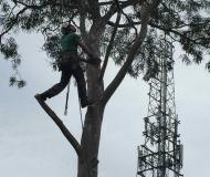 tree-service3