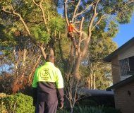 tree-services-img