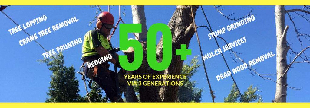 Tmackney & Sons Tree Services - Tree Removal West Pennant Hills